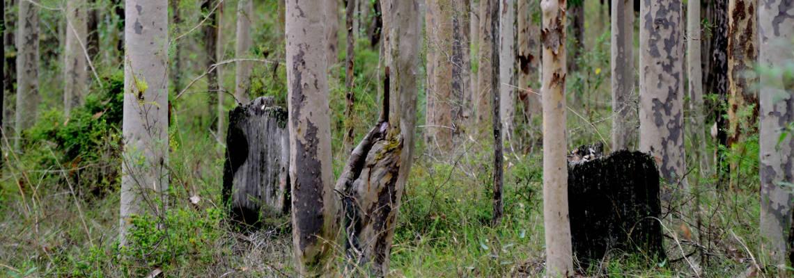 Orienteering through trees